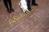"Louie, a bulldog mix from Seattle, Wash. hangs with his owner Jerry Esterly during a protest against the construction of a new underground animal research facility on the University of Washington campus on October 2, 2015. ""Louie is a vegan,"" says Esterly ""and enjoys tempeh sandwiches with vegan mayonaise."" Esterly says it has helped Louie's allergies. (photo Karen Ducey photography)."