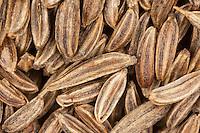 Echter Kümmel, Wiesen-Kümmel, Wiesenkümmel, Samen, Körner, Saat, Carum carvi, Caraway, meridian fennel