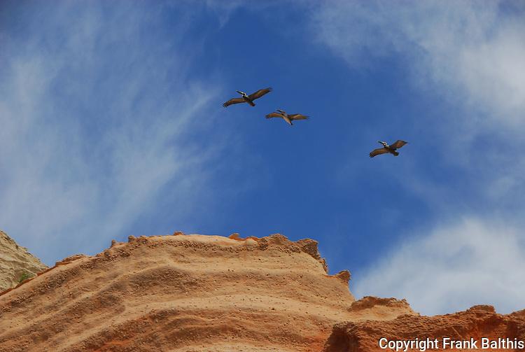 Brown pelicans and sandstone cliffs