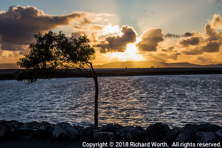 Minutes before sunset, clouds provide a natural filter for the sun, shining and lighting the wind-swept tree along the small boat lagoon at San Leandro's Marina Park on San Francisco Bay.