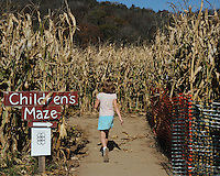 Corn Maze at Treinen Farm on Saturday, 10/16/10 in Lodi, Wisconsin