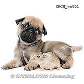 Xavier, ANIMALS, REALISTISCHE TIERE, ANIMALES REALISTICOS, FONDLESS, photos+++++,SPCHWS601,#A#