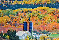 Farm and autumn colors of mixedwood forest in Les Notre-Dame Mountains (Appalachian Mountains). Great Lakes - St.  Lawrence Forest Region.<br />
