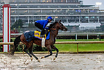 November 1, 2018: Thunder Snow (IRE), trained by Saeed bin Suroor, exercises in preparation for the Breeders' Cup Classic at Churchill Downs on November 1, 2018 in Louisville, Kentucky. Carolyn Simancik/Eclipse Sportswire/CSM
