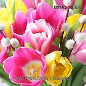 Gisela, FLOWERS, BLUMEN, FLORES, photos+++++,DTGK2084,#f#