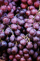 FOOD GROUPS: FRUIT<br /> Purple Grapes