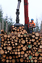 TO GO WITH STORY BY Arthur Beesley. DATE 8 FEB 2018. A contractor carries out log harveshing at Castle Archdale near Balcas Timber Ltd, Ballinamallard, Enniskillen Co. Fermanagh, Northern Ireland. Photo/Paul McErlane