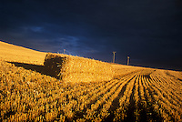 CROP LINES & BALED HAY UNDER A FOREBODING SKY