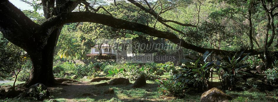 France/DOM/Martinique/Habitation Céron: La forêt tropicale