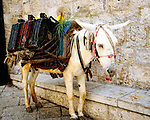 Donkey carrying luggage in the Old City of Jerusalem, Israel