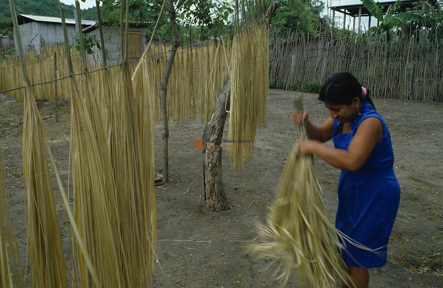 Woman drying for processing fiber Tokilla (Carlodovica palmata)