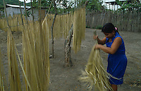 Woman drying for processing fiber Tokilla (Carlodovica palmata)
