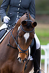 British Dressage. Class 3. {10}/{02}/{2019}. ~ MANDATORY Credit Elli Birch/Sportinpictures - NO UNAUTHORISED USE - 07837 394578