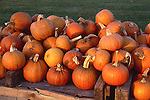 Pumpkins for sale at a roodside stand in Massachusetts, New England, USA