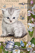 Isabella, REALISTIC ANIMALS, REALISTISCHE TIERE, ANIMALES REALISTICOS, paintings+++++,ITKE066176-L,#a#, EVERYDAY ,cats ,collage