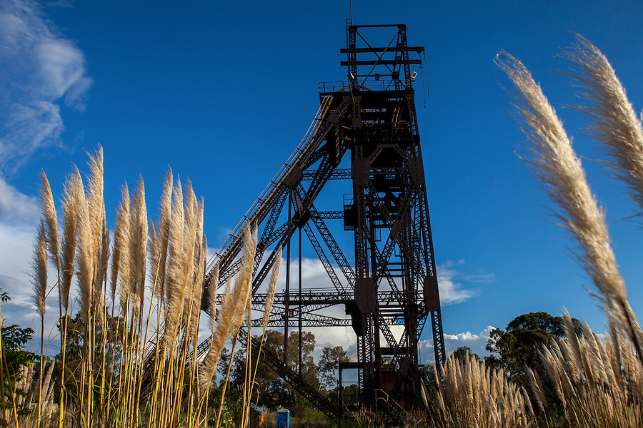 Durban Deep gold mine's s now defunct headgear rises up between stalks of pampas grass.  South Africa has more than 6000 gold mines that are no longin operation.