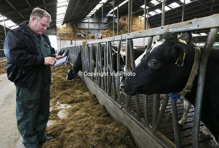 Foto: VidiPhoto<br /> <br /> HETEREN - Melkveehouder Hein Kuijpers uit Heteren in Gelderland, bekijkt de prestaties van zijn melkvee op een i-pad, via een zogenoemd managementprogramma. Steeds meer veehouders hanteren handige notebooks of tablets om snel bedrijfsgegevens te controleren of bij te houden. Hein runt samen met zijn tweelingbroer Theo een maatschap met ruim 200 melkkoeien.