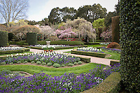 The Sundial Garden, formal beds with flowers ands tulip bulbs; Filoli, Wall Garden, formal estate garden, California