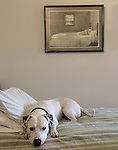 "THE MASTER OF THE MASTER BEDROOM--Bo Grout keeps watch under the watchful eye of Andrew Wyeth's painting, ""Master Bedroom""."