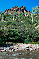 A desert landscape of the Aravaipa Canyon Wilderness with Saguaro Cacti lining the canyon walls. Arizona.