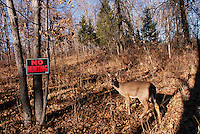 "White tail doe stands next to ""No Hunting"" sign, Maine USA"