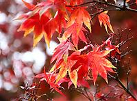OCT 14 Westonbirt Arboretum Autumn Colour