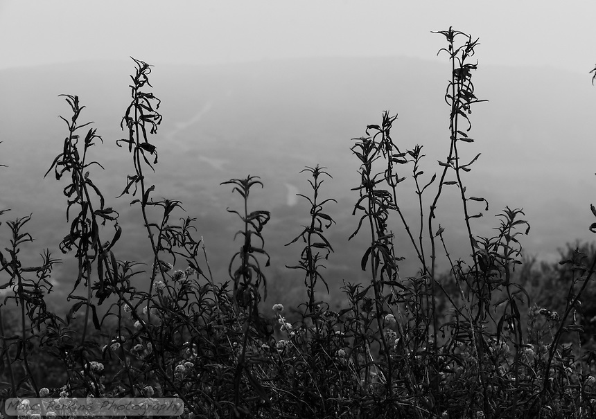 A trail winds off in the distance behind scraggly foliage into a fog shrouded unknown up a hill.  Taken in Crystal Cove State Park on a foggy afternoon, just before sunset.  I love the creepy feel of this.