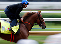 LOUISVILLE, KENTUCKY - MAY 04: Gunnevera, owned by Peacock Stables, LLC and trained by Antonio Sano, exercises in preparation for the Kentucky Derby at Churchill Downs on May 4, 2017 in Louisville, Kentucky. (Photo by Jon Durr/Eclipse Sportswire/Getty Images)