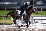 November 1, 2018: Liam the Charmer, trained by Michael W. McCarthy, exercises in preparation for the Breeders' Cup Turf at Churchill Downs on November 1, 2018 in Louisville, Kentucky. Alex Evers/Eclipse Sportswire/CSM