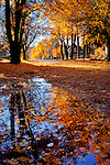 Idaho, Coeur d'Alene. Autumn street scene.