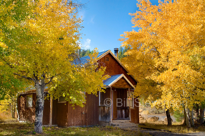 A photo of a red mountain cabin and yellow fall aspen trees in Truckee in California
