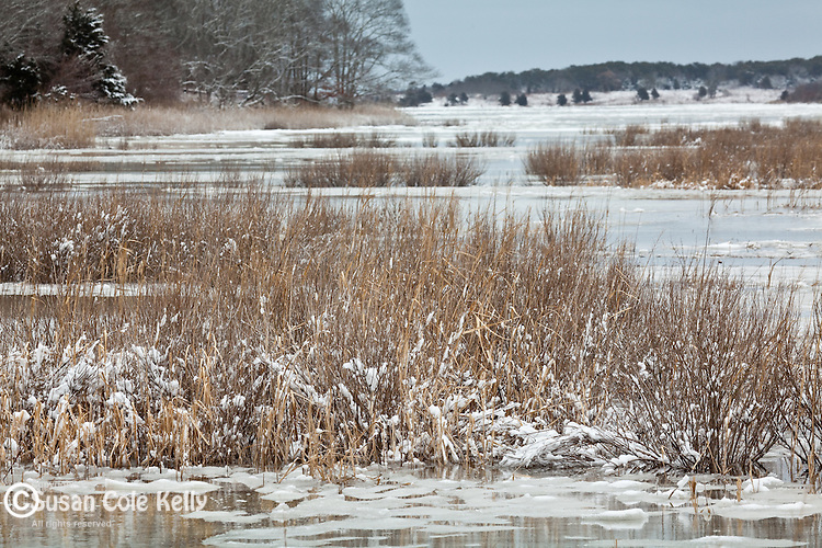 A winter day at Quivett Creek in Dennis, Cape Cod, MA, USA