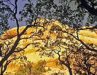 Trees outlined against rock formation. Grand Staircase-Escalante National Monument, Utah