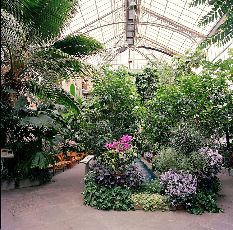 Steeped in history, rich with tradition, the United States Botanic Garden (USBG) is one of the oldest botanic gardens in North America. It informs visitors about the importance, and often irreplaceable value, of plants to the well-being of humankind and to earth's fragile ecosystems. The Garden highlights the diversity of plants worldwide, as well as their aesthetic, cultural, economic, therapeutic, and ecological significance. Pictured here is the interior of the Conservatory.