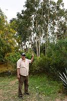 EGYPT, Ismallia , Sarapium forest in the desert, the trees are irrigated by treated sewage water from Ismalia / AEGYPTEN, Ismailia, Sarapium Forstprojekt in der Wueste, die Baeume werden mit geklaertem Abwasser der Stadt Ismalia bewaessert, Hossam Hammad, Professor der Landwirtschaftlichen Fakultät der Ain Shams University in Kairo, grosse Eukalyptus Baeume