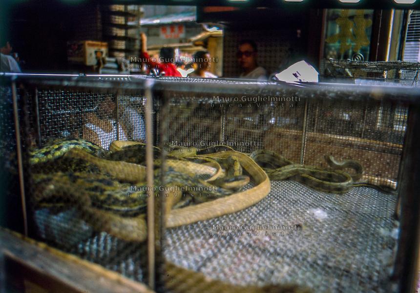 una gabbia con serpenti nel mercato alimentare degli animali <br /> a cage with snakes in the food market of animals