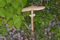 Parasol, Parasolpilz, Riesenschirmling, Riesen-Schirmling, Macrolepiota procera, Lepiota procera, parasol mushroom