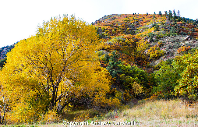 Foliage in Waterton Canyon, Colorado peaks with color in late autumn.