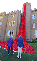 Hertford Castle, November 2nd 2016: Hertford Castle marks the centenary of the end of World War One with a 'fountain' of 15000 knitted poppies. The poppies have been knitted and crocheted by The Secret Society of Hertford Crafters, as well as school children, people in care homes and other local volunteers. More than 170 miles (270km) of wool has been used to create the installation in time for Remembrance Sunday. <br /> CAP/ROS<br /> &copy;ROS/Capital Pictures