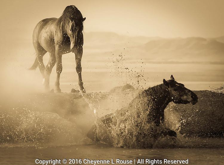 Drama at the Waterhole - Utah - Wild Horses - Mustangs