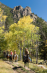 Family group outdoors on a crisp and cool fall morning riding horses on a wrangler-led ride, amid aspen groves high in Rocky Mountain National Park, near Estes Park, Colorado, USA (MR #88)