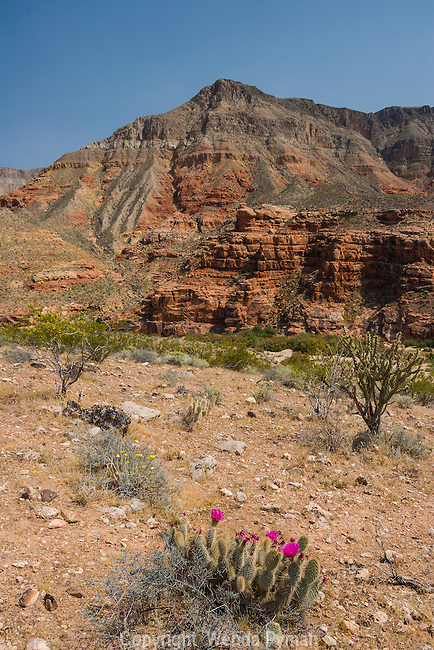 The Virgin River Recreation Area is part of the Arizona Strip near the NW border.