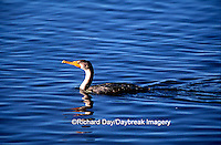 00673-002.20 Double-crested Cormorant (Phalacrocorax auritus) J.N. Ding Darling NWR   FL