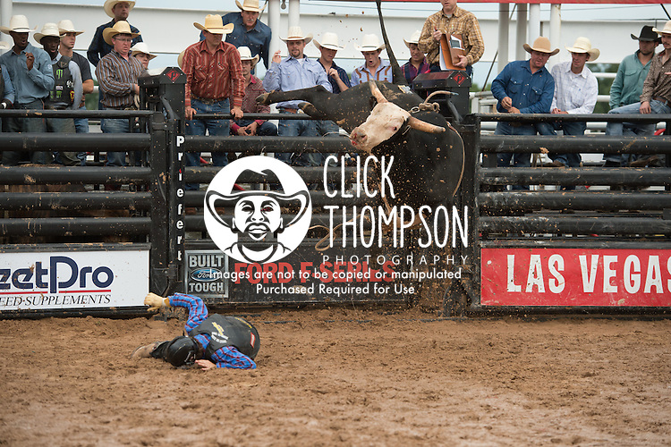 Eric Louis attempts 602A American Sniper of Owens/ Tuggle during the American Bucking Bull, Incorporated event in Decatur, TX - 6.3.2016. Photo by Christopher Thompson