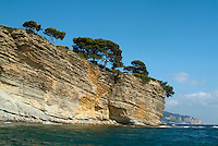 Pine trees atop a coastal ridge in the bay at La Ciotat, Provence, France.