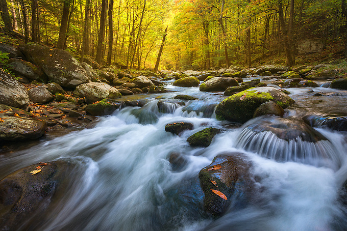 The Middle Prong of the Little River flows through autumn forest as soft morning light penetrates from beyond.