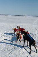 Veteran Iditarod musher Paul Gebhardt's sled dogs ready to leave Shaktoolik checkpoint along Bering Sea, Alaska