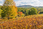 Fall color in Franklin, Maine, USA
