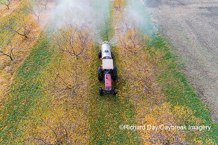 63801-12206 Spraying peach orchard in fall-aerial  Marion Co. IL