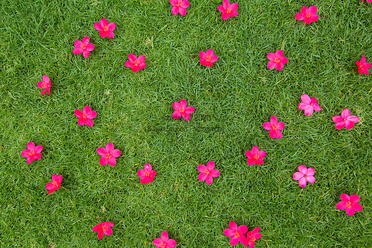 pink flowers with a happy face in the grass, Maui, Hawaii, USA